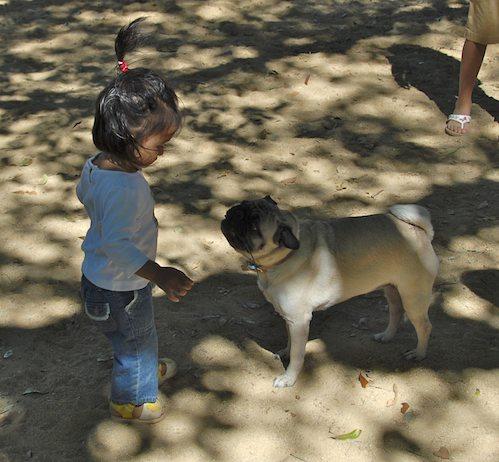 Rio and Sheba have fun with Daisy