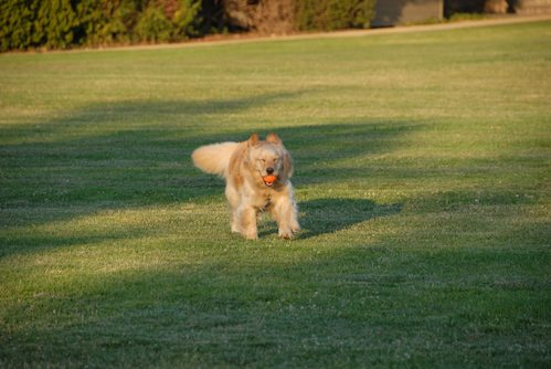Palo Alto Dog Park Gang