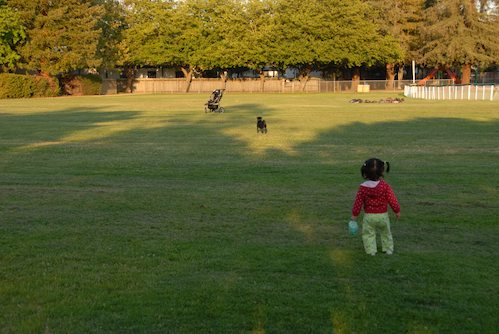 Palo Alto Dog Park Gang