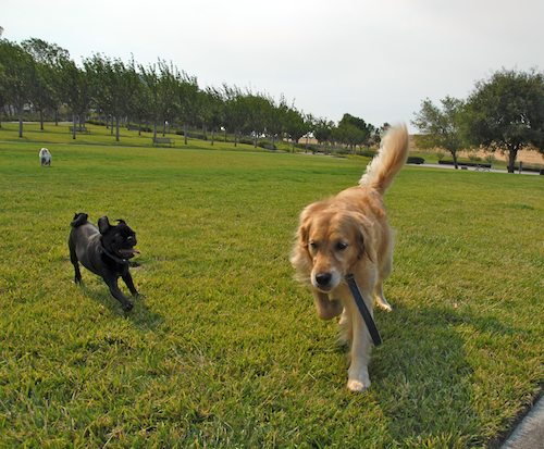 Daisy, Rio and Sheba Play