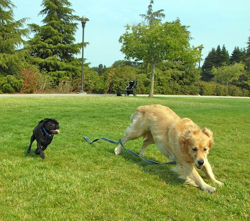 Daisy, Rio and Sheba Play