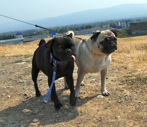 Sheba and Rio have fun at the Water Park & Trash Mountain