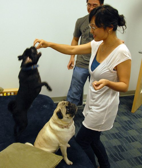 Hug Pugs in doors and out!