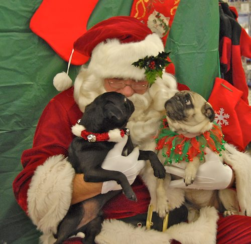 Hug Pugs with Santa Claus