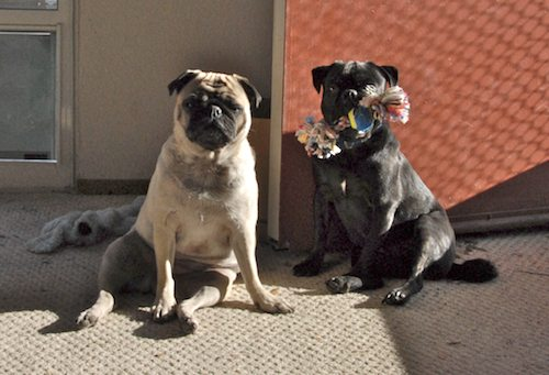 Rio and Sheba in the Sun - December 15 2007!
