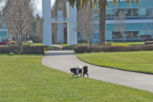 Rio and Sheba have fun in Mountain View