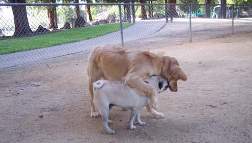 Daisy hugging Sheba