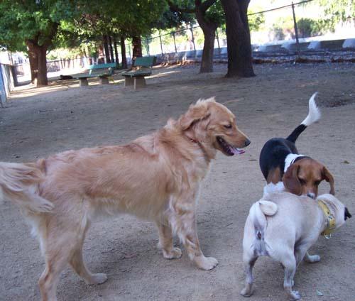 Daisy, Toby and Sheba
