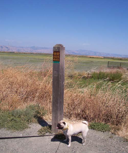 SF Bay Sign Post
