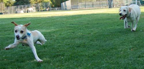 Atlas chases Leo