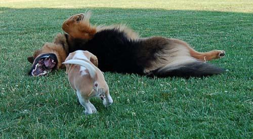 Kaya and Gimley