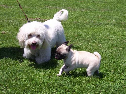 Sheba and Blanco having fun!