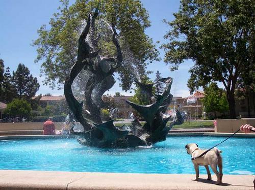 Sheba at Stanford's White Plaza