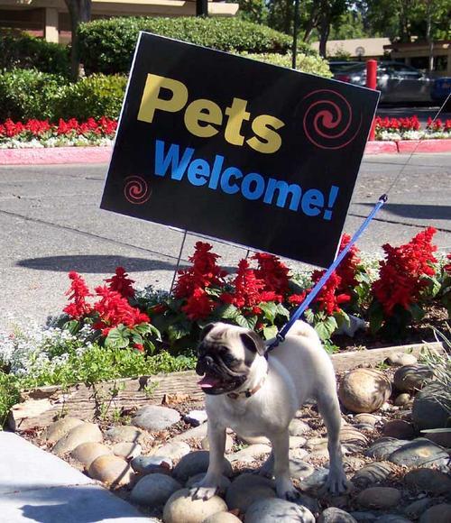 Sheba's home - PETS ALLOWED!!!