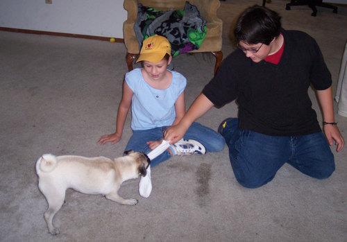 Adam, Julia and Sheba play Tug-a-War