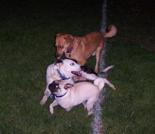 Rusty, Bandit and Sheba