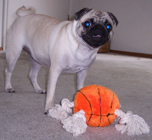 Sheba's new basketball