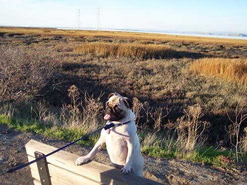 Sheba on a Bay Bench