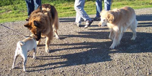 Sheba and Big Dog 3 and 4