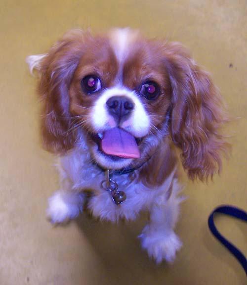 Carrie - Puppy School Graduate!