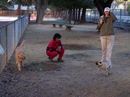 Daisy, Sheba and Peeps