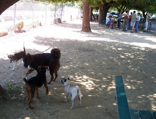 Dogs and People in separate parts of the park