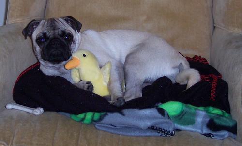 Little Sheba and her Hug Duck