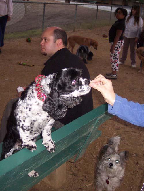 Doggy Treat