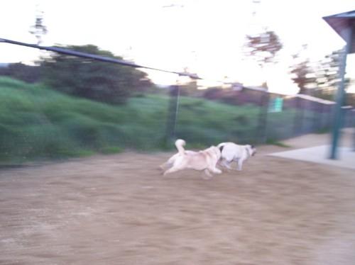 Roy chasing Sheba