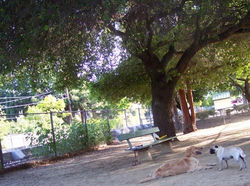 Sheba and Daisy relax