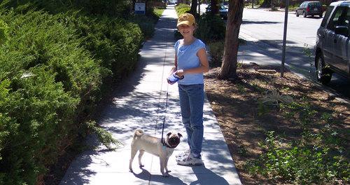 Julia and Sheba take a walk