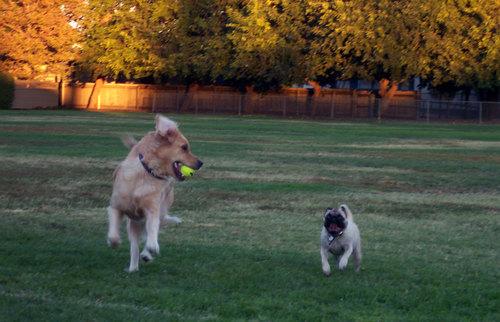 Kayla and Sheba running