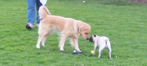 Kayla and Sheba sharing