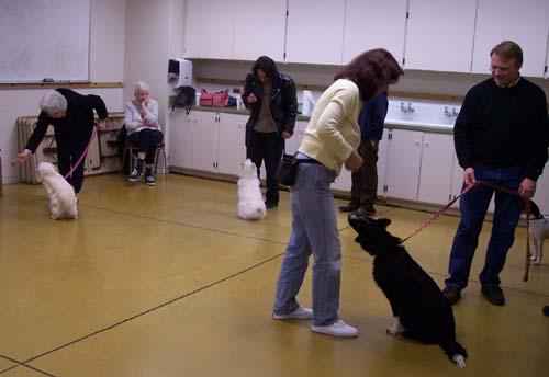 Sirius Training - Gioia, DeeDee and Willis