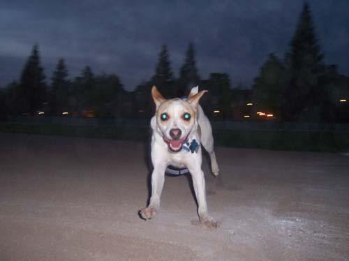Leo running fast