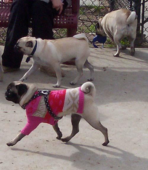 Lilo and Sheba walking