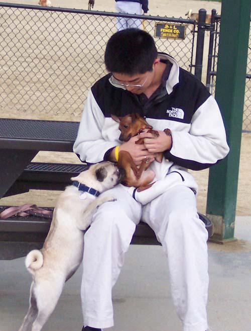 Little Dog and Sheba