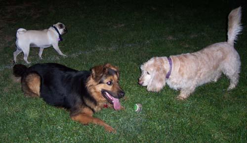 Louis, Gimley and Sheba, late night meetup fun