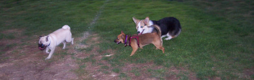 Lucy and Sheba and friend
