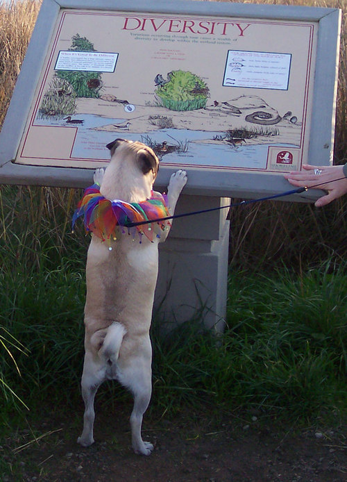 Sheba looks at a Diversity Sign