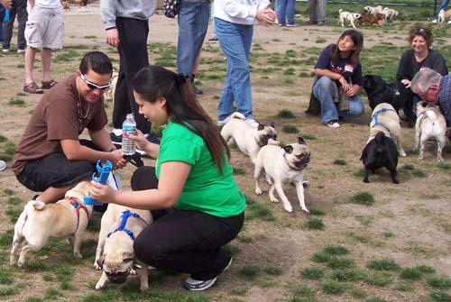 More Peeps and Pugs