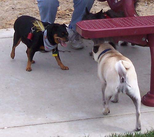 Muggsy and Sheba