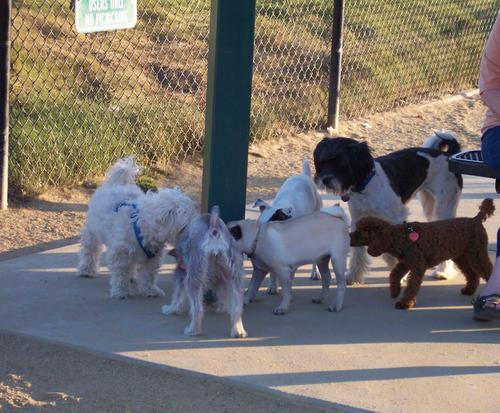 Little Sheba and the Dog Park Gang