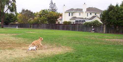 Sheba and friend racing to trash can