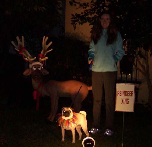 Sheba and Reindeer