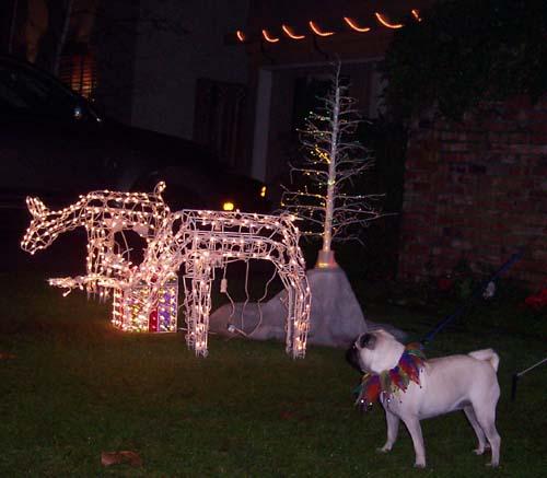 Sheba and Light Reindeers