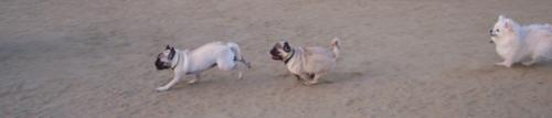 Roy chasing Little Sheba