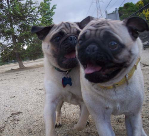 Sheba and Roy smiling