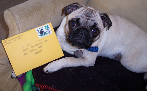 Sheba sends a Birthday card to Dr. Jim with a special Sheba stamp