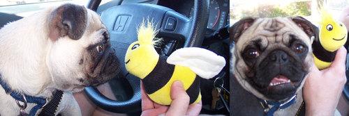 Sheba and Mr. Squeaky Bee
